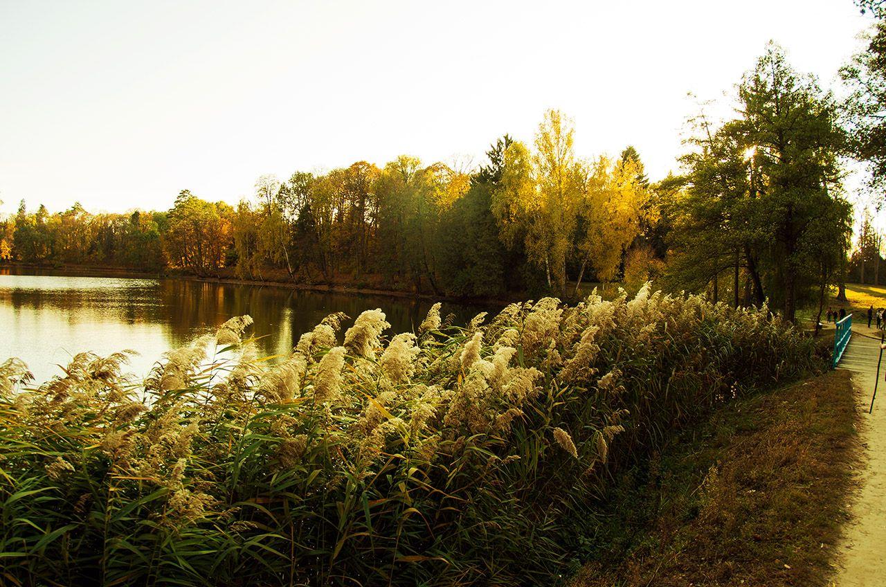 """Міст між сонцем і озером, """"Тростянець"""""""