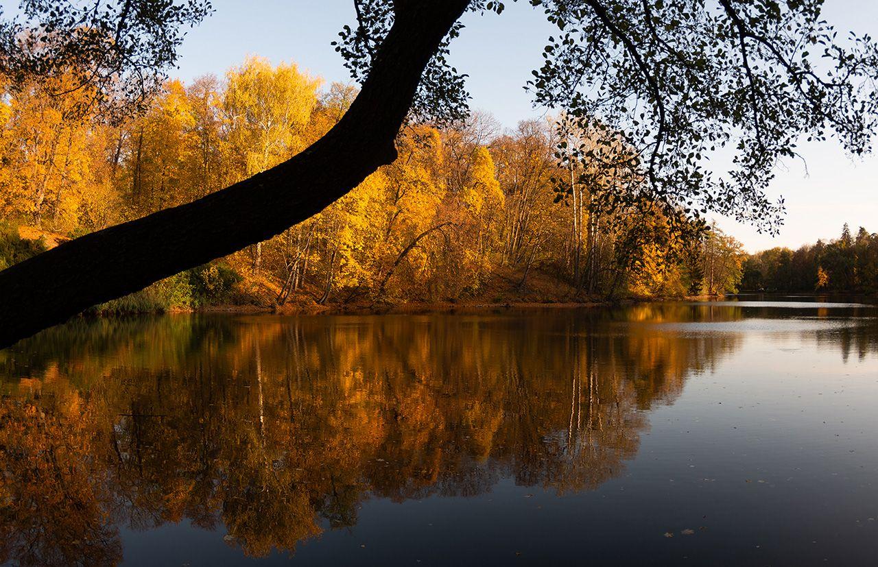 """Звук, який утворює парк і озера, """"Тростянець"""""""