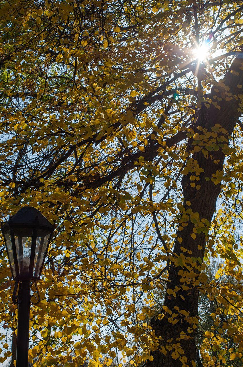 Осінь в Качанівці -  Photo by Oleksii Marchenko